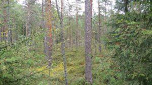 Bosco a Helvetinjärvi